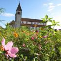 Reichenauer Blütensommer vor der Peter und Paul Kirche in Niederzell