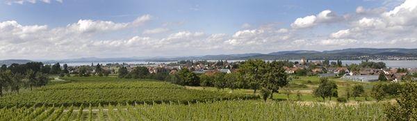 Die Rebflächen der Insel Reichenau